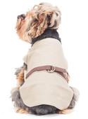 Czy warto ubierać psy?
