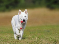 Cztery kategorie najlepszych zabawek dla psów