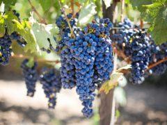 Akcesoria winiarskie do domowych wyrobów